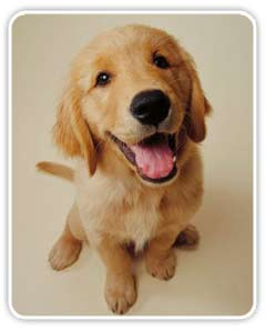 La educación del perro: órdenes básicas