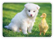 Enséñale a tu mascota donde hacer sus necesidades