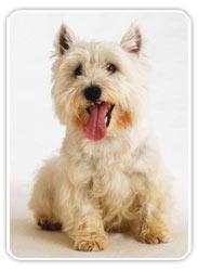 La educación del perro: órdenes básicas (Paso 4)