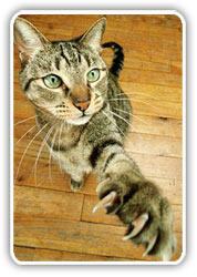 ¿Qué hacer con las uñas de los gatos?