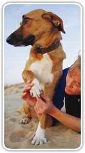 ¿Qué hacer cuando tu mascota sufre un accidente?