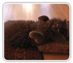 El sedentarismo del gato