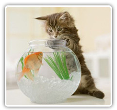 gatos-duenos.jpg