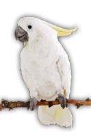 aves-viaje.jpg