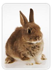 La alimetación adecuada para los conejos