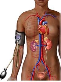 Hipotension Arterial