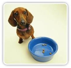 Adoptar un Perro V - La alimentación