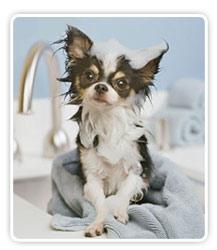 perro-higiene.jpg