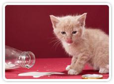 gato-comiendo.jpg
