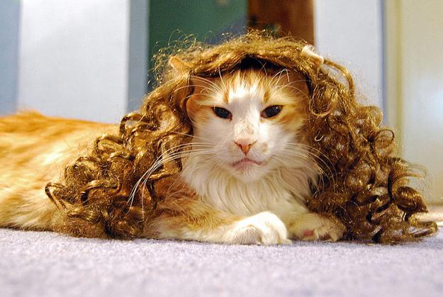 gato-con-peluca