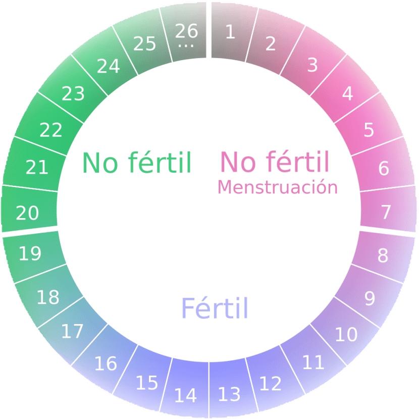 Ciclo menstrual