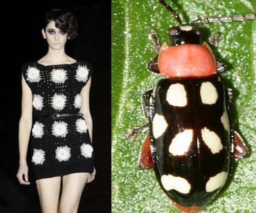beetle_12.png