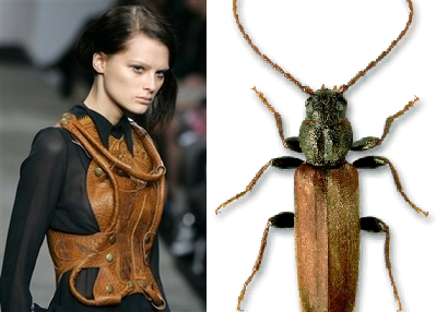 beetle_13.png