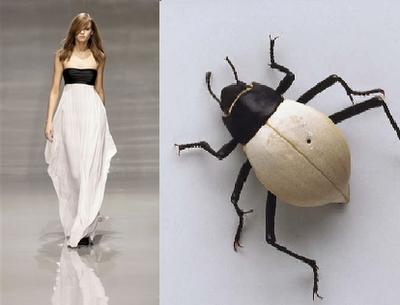 beetle_16.png