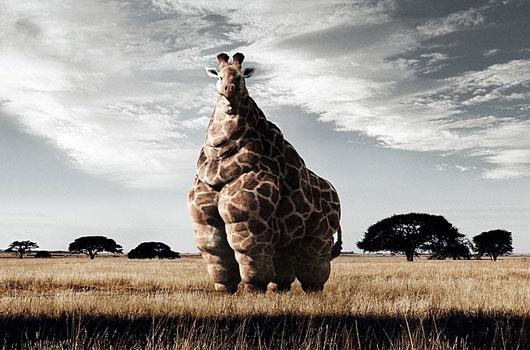 jirafa-americana.jpg