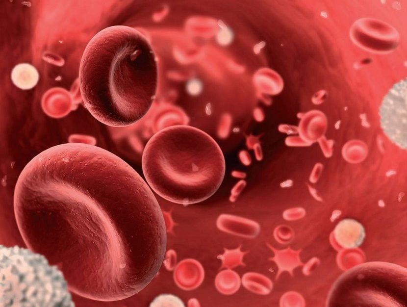 Qué es la anemia y la hemoglobina