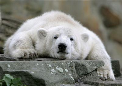 """Knut""ha"