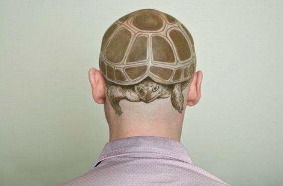 ¡Genial la tortuga! Crédito Imagen