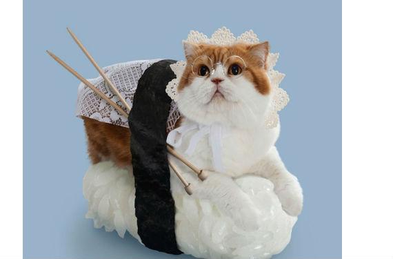gato sushi 4
