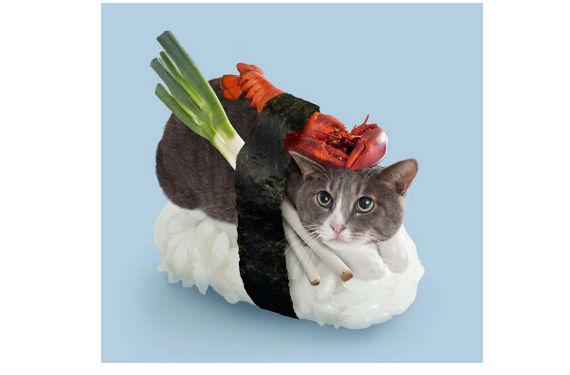 gatos sushi 2