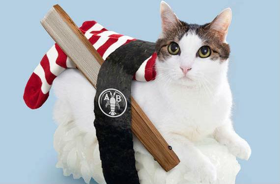 gatos sushi 3
