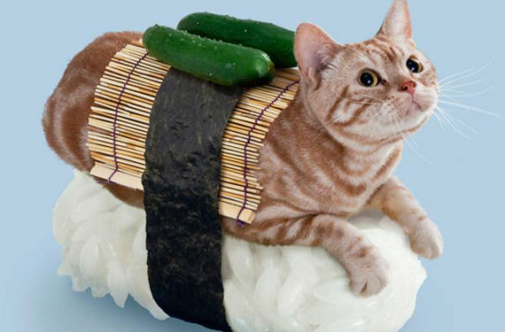 gatos sushi 4