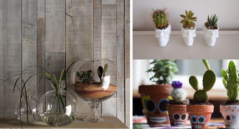 Macetas de moda para Cactus