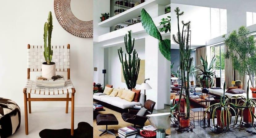 Pautas de decoracion con cactus