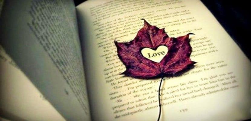 amor bezzia