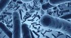 Estas son las 3 bacterias más comunes en los alimentos