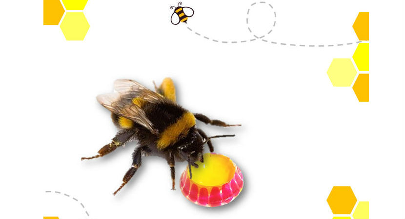 kit-accesorio-llavero-salvar-abejas-03