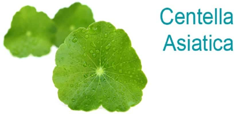 centella asiatica - retail website image