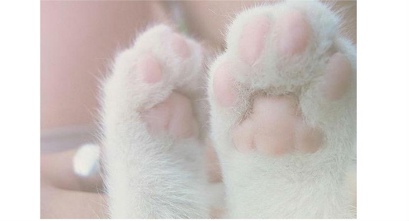 crema-de-manos-para-oler-a-gato-001