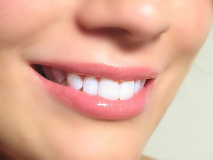Los dientes y sus funciones