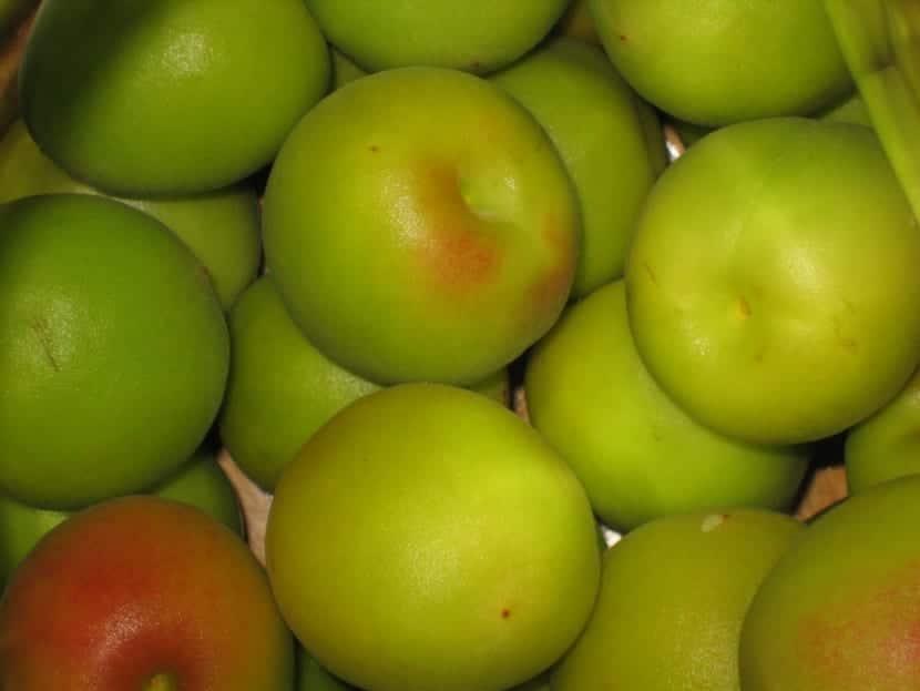 ciruela-verde-china