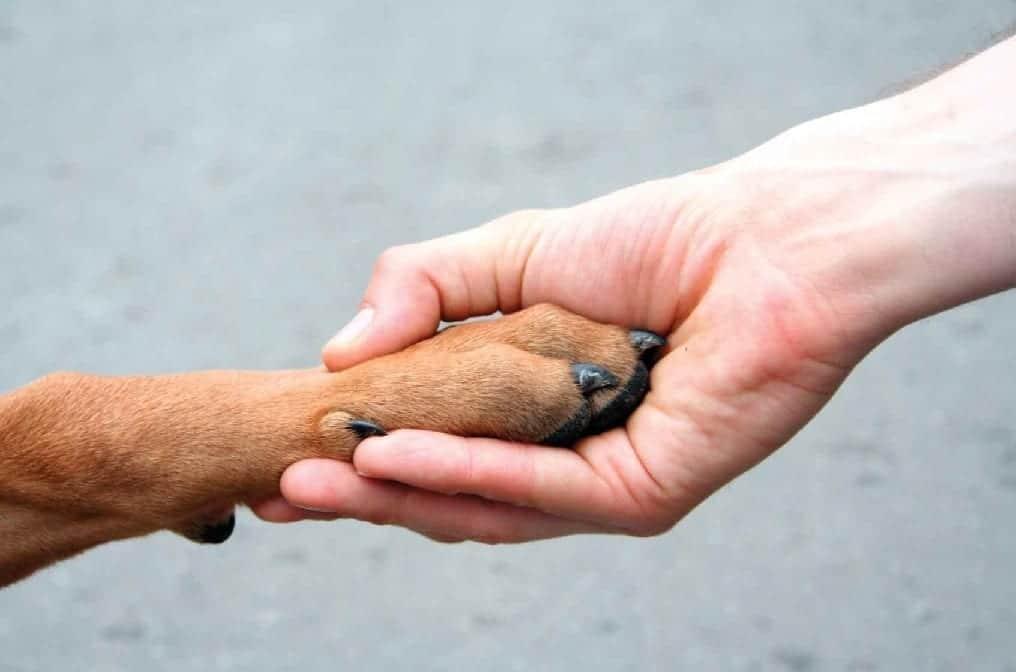 8-razones-para-adoptar-tu-mascota