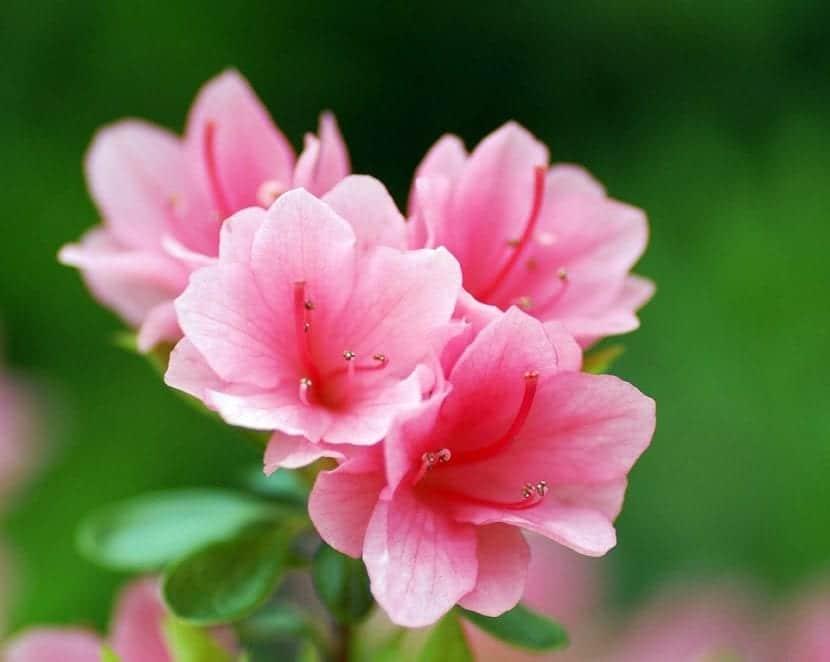 Flores bonitas para tu terraza o jard n - Fotos de flores bonitas ...