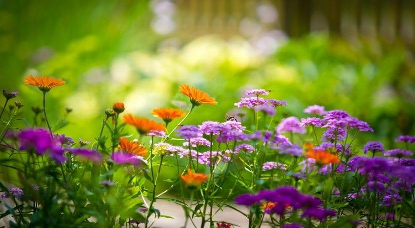 Flores bonitas para tu terraza o jardín