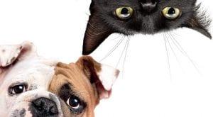 perros o gatos