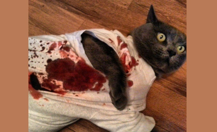 gato-asesino