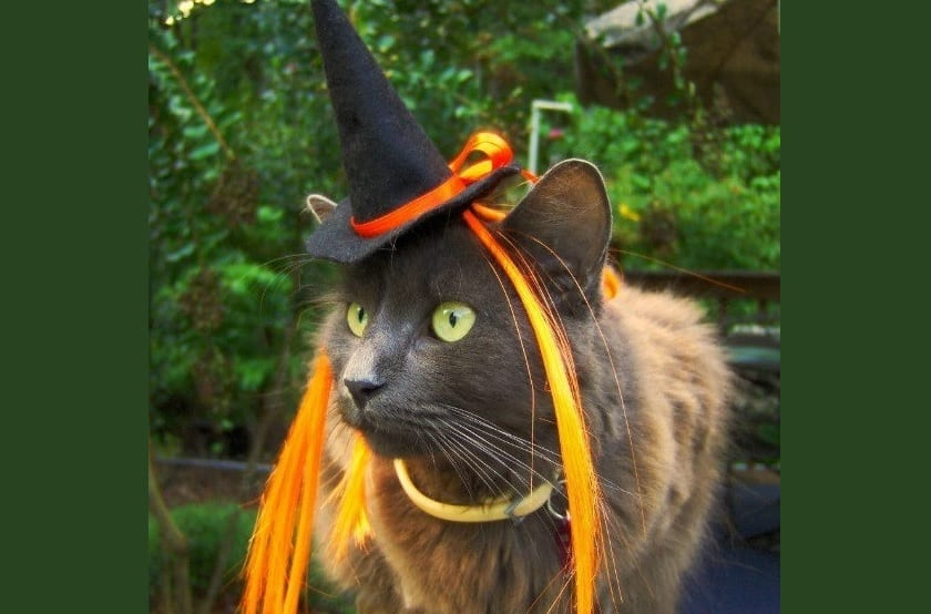 gato-brujo