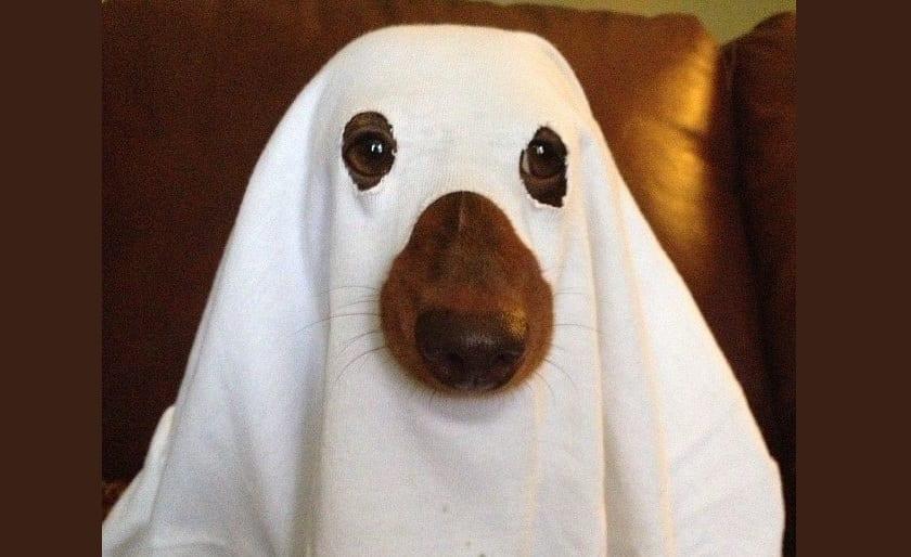 perro-fantasma