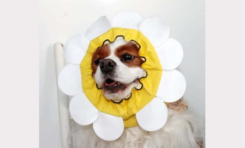 perro-flor