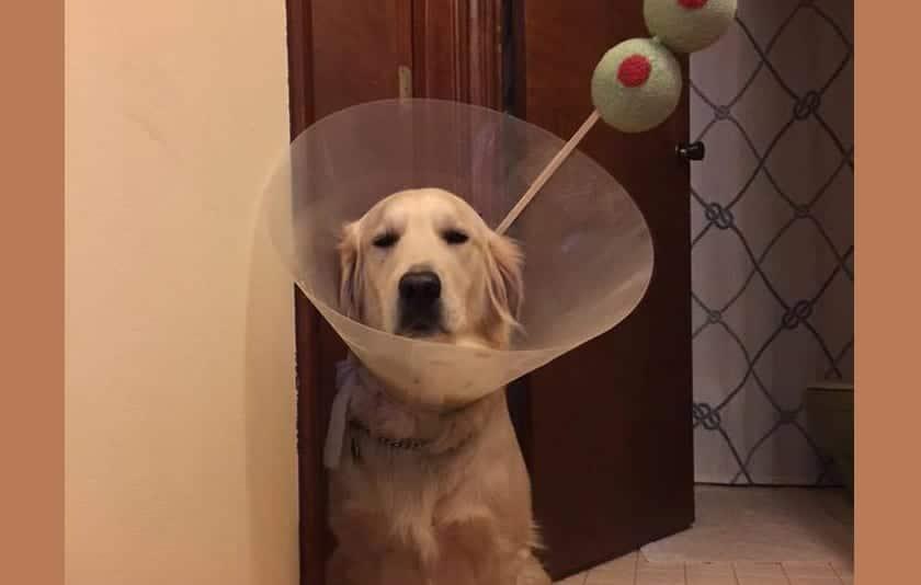 perro-martini