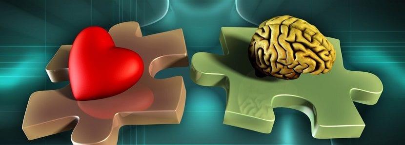 Fichas de puzzle con un corazón y un cerebro