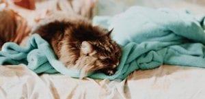 Eliminar el pelo de los gatos
