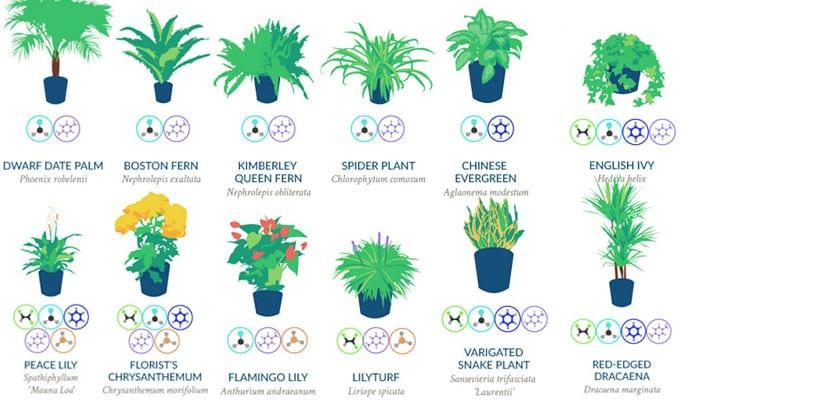 Plantas de interior para purificar el aire