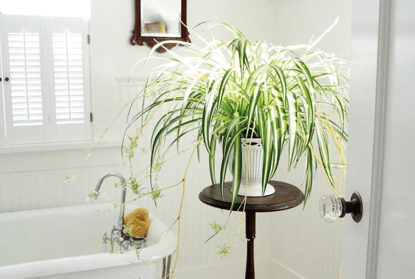Las mejores plantas para decorar el ba o for Decoracion de macetas para plantas