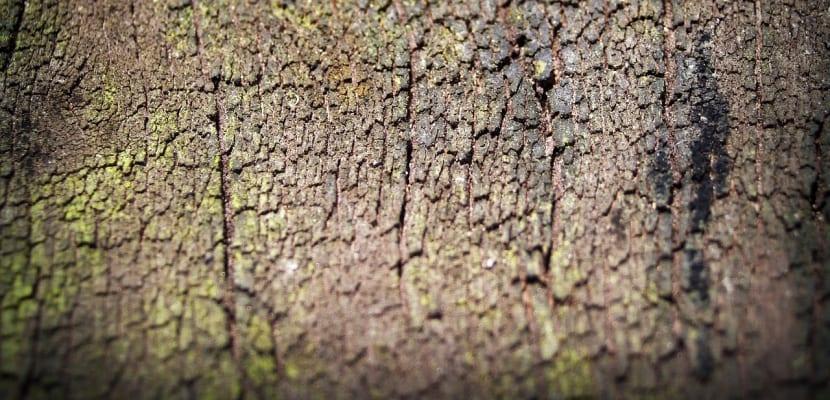 corteza de árbol