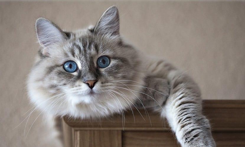 Enfermedades frecuentes en los gatos mayores de 8 años